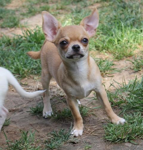 http://www.dogchihua.ru/kids/IMG_1930.jpg